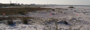 A roped off nesting area on Siesta Key 2008