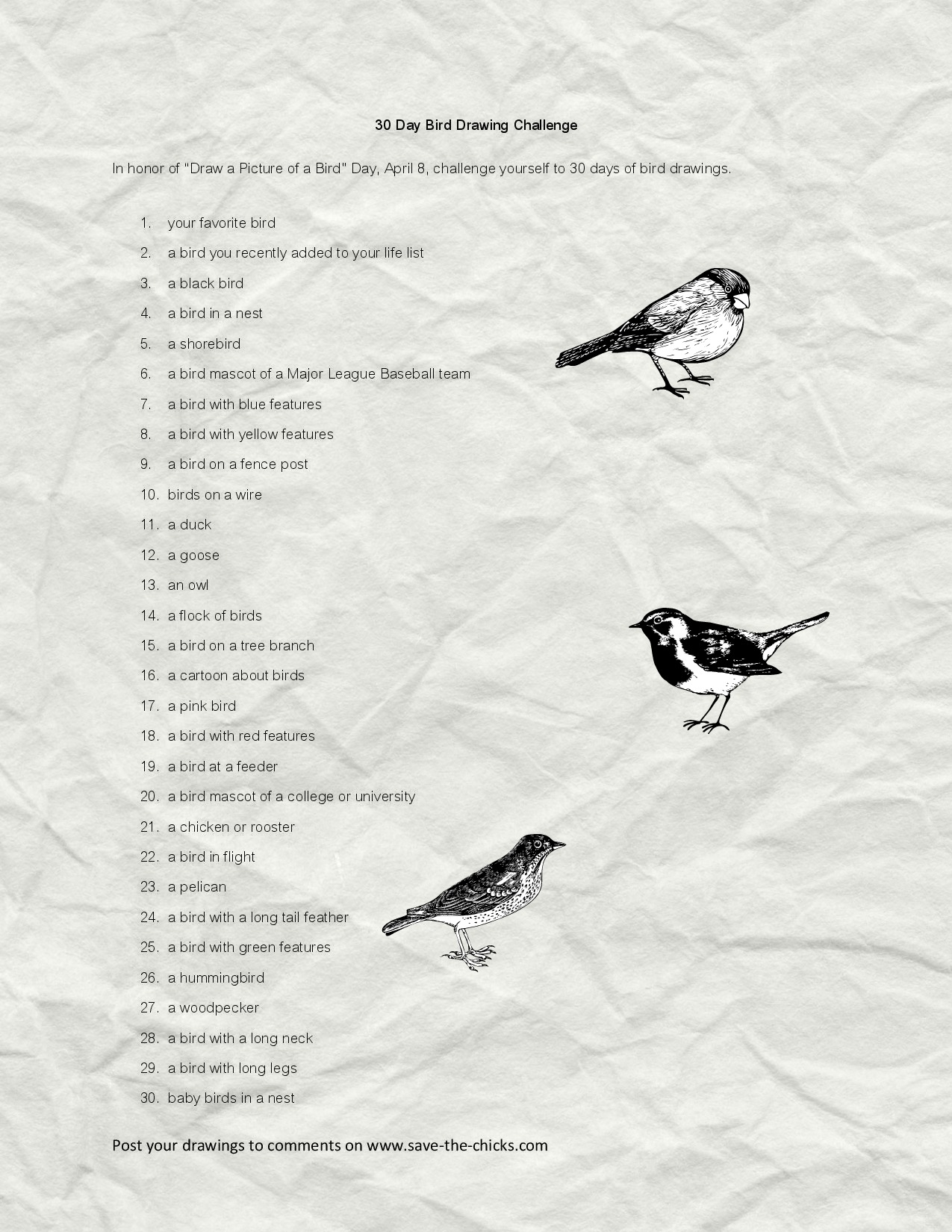 30 Day Bird Drawing Challenge-page-002