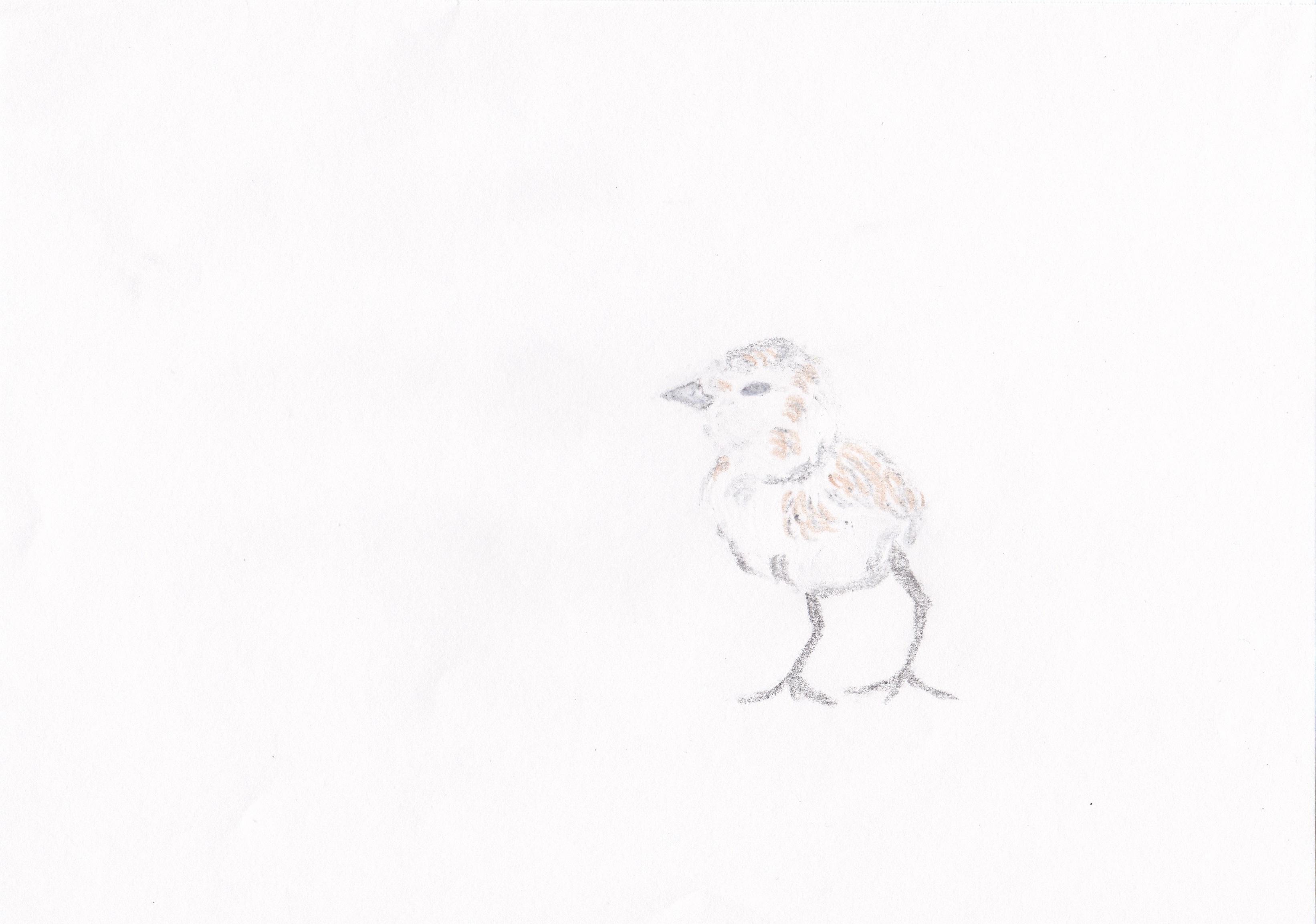 Crayon chick