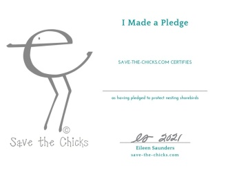 Save The Chicks Certificate